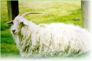 Козий пух для вязания платков